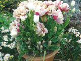 Wonderful displays for your Summer garden pots