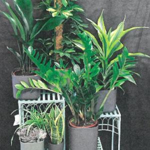 2 Indestructible House Plants