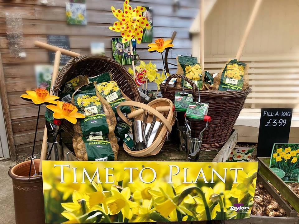 Spring Bulbs Tea'n a Talk