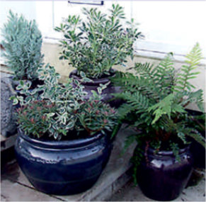 Winter Patio Pots